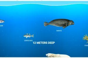 Belajar Aneka Hewan di Lautan - catatan bunda 2020